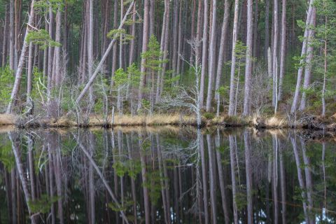 Reflections at Loch Mallachie
